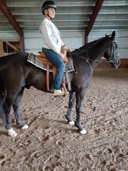 Sir Isaac, Appendix Quarter Horse Gelding for sale in New York