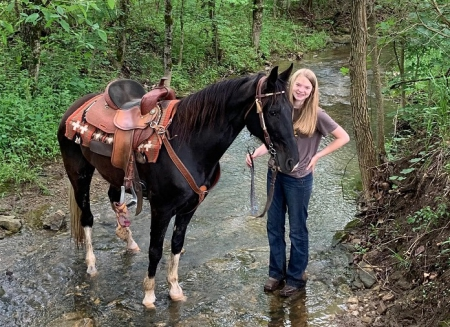 Ruby, Tennessee Walking Horses Mare for sale in Missouri