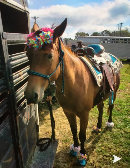 Lilly, Quarter Pony Mare for sale in Missouri