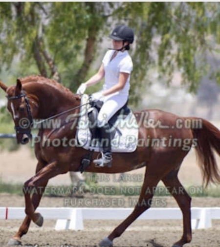 Sparkling Savannah, American Warmblood Mare for sale in California