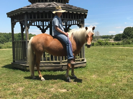 Sweet Maggie Mione , Missouri Fox Trotting Horse Mare for sale in Missouri