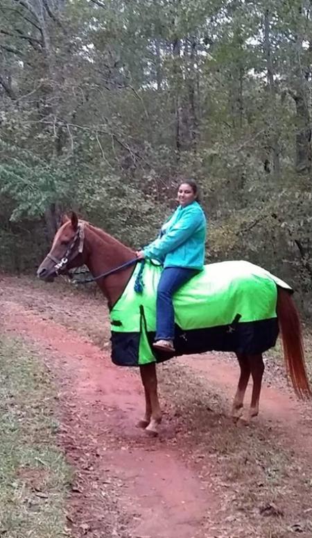 SVA Anazeh El Harik, Arabian Gelding for sale in Georgia
