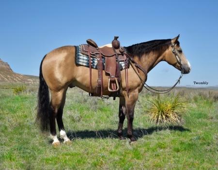 Ranger, American Quarter Horse Gelding for sale in Nebraska