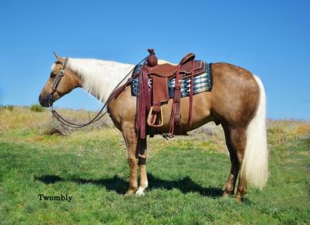 Koda, American Quarter Horse Gelding for sale in Nebraska