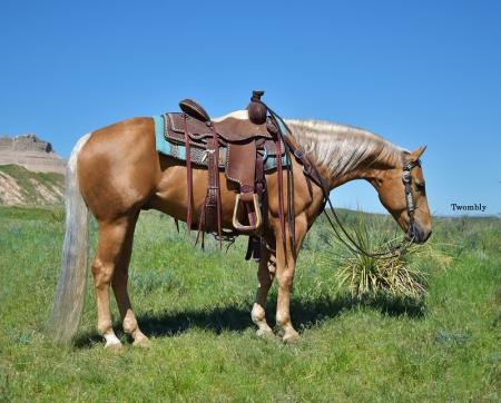 PD Disco Smoke, American Quarter Horse Gelding for sale in Nebraska