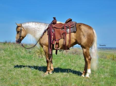 Xtra Step Dun It, American Quarter Horse Gelding for sale in Nebraska