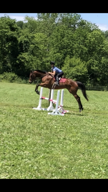 Fire and Gasoline, Thoroughbred Gelding for sale in Pennsylvania