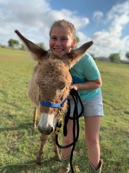 Gunner, Donkey Jack for sale in Texas