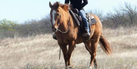 Spark, American Quarter Horse Gelding for sale in Texas