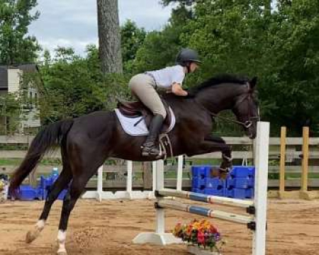 Easter , Thoroughbred Gelding for sale in Georgia