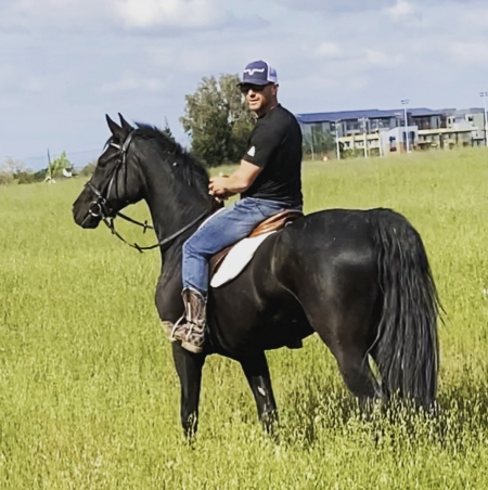 Exotic imported Westphalian Gelding, Westphalian Gelding for sale in Nevada