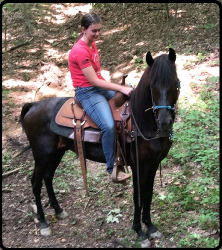 Jose, Rocky Mountain Gelding for sale in Kentucky
