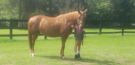 Calypso Coffee (Caly), Warmbloods (All) Mare for sale in Virginia