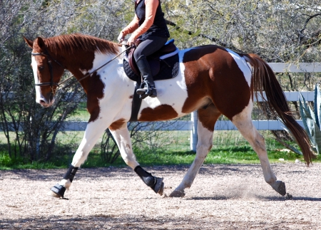 Rap N Roller, Thoroughbred Cross Gelding for sale in Arizona