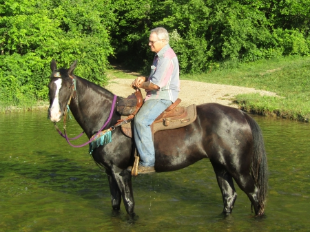 Pushes Money Delight , Tennessee Walking Horses Mare for sale in Michigan