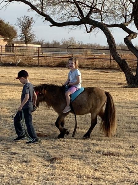 Spirit, Shetland Pony Gelding for sale in Texas