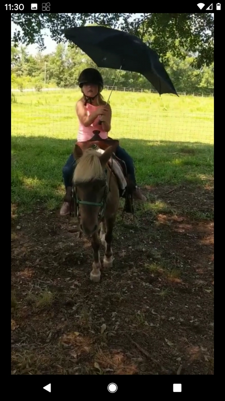 Ryder- As close to bomb proof pony you'll find!, Ponies (All) Gelding for sale in South Carolina