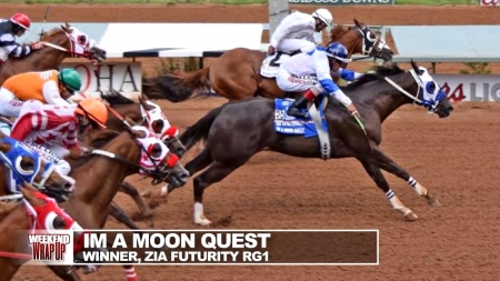 I'm A Moon Quest, Quarter Horse Cross Gelding for sale in New Mexico