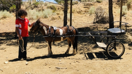 JuneBug , Miniature Mare for sale in California