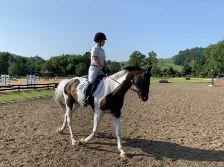 Call Me Cricket , Dutch Warmblood Mare for sale in Virginia