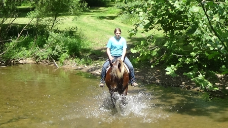 Kahlua , Rocky Mountain Mare for sale in Pennsylvania