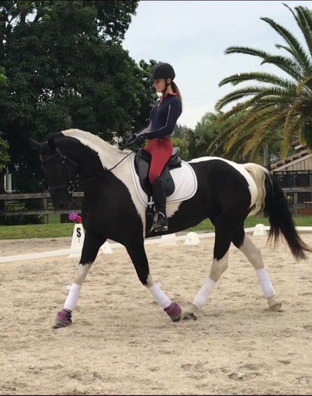 Panda, Warmbloods (All) Mare for sale in Florida