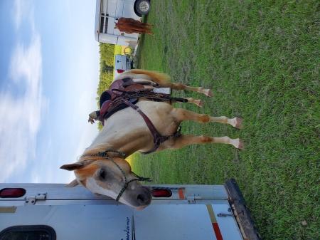 Maverick , American Quarter Horse Gelding for sale in Texas