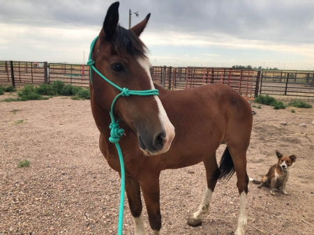 Wrangler, Mustang Gelding for sale in Colorado
