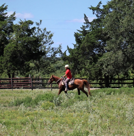 Smartie Pants- Super AQHA Mare- Athletic & Safe, American Quarter Horse Mare for sale in Texas