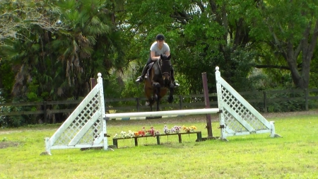 Jemma, Thoroughbred Mare for sale in Florida