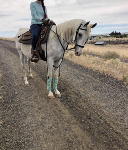 Miss Incommand, Arabian Mare for sale in Washington