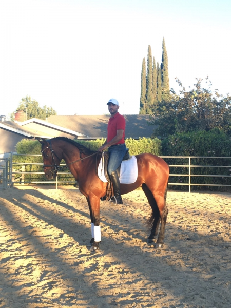 Colorado - Bay Andalusian Gelding, Andalusian Gelding for sale in California