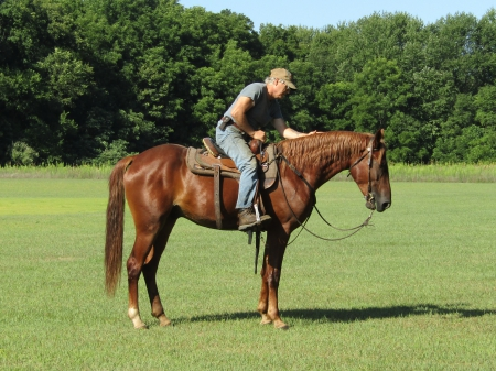 Razz, Tennessee Walking Horses Gelding for sale in Michigan