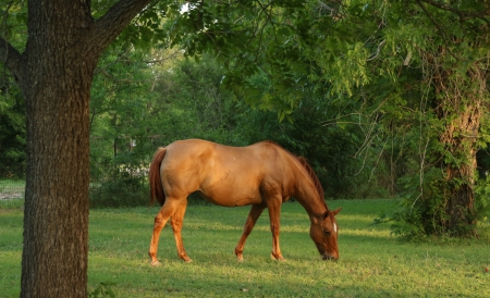 QH Mare - April, American Quarter Horse Mare for sale in Texas