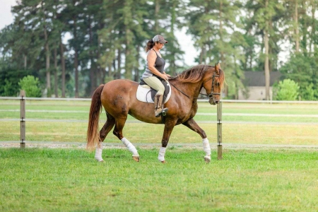 7yr old Andalusian mare 16.2hh, Andalusian Mare for sale in Massachusetts