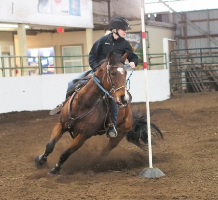 MC Dash N' Dandy (Dash), Appendix Quarter Horse Mare for sale in Oregon