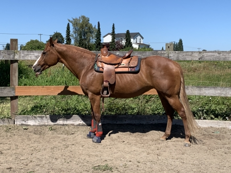 Rubys Dunn Mpressin, American Paint Horse Association Mare for sale in Washington