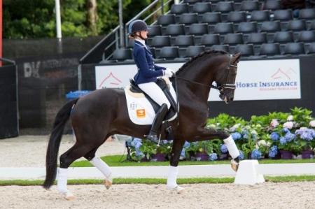 Titan, Irish Sport Horse Gelding for sale in British Columbia