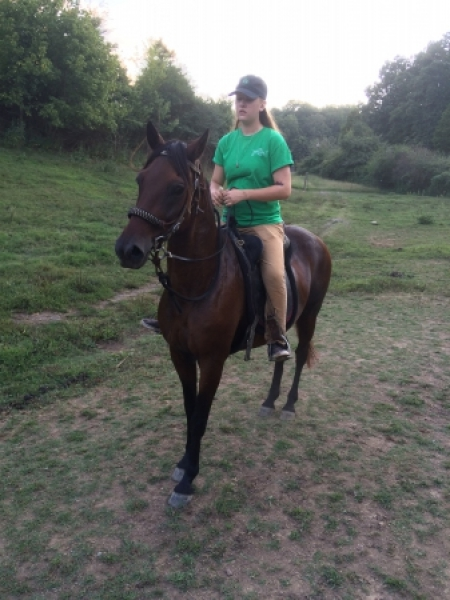 Rico, Peruvian Paso Gelding for sale in Tennessee