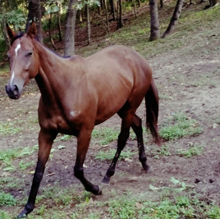 Queen Of Corinth, Thoroughbred Mare for sale in Illinois