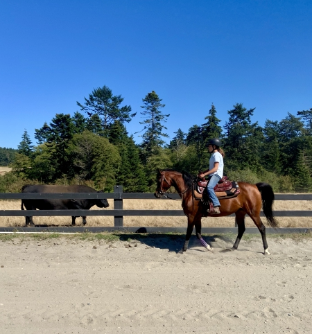 Cheyenne Wind V, Arabian Mare for sale in Washington