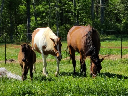 Millie, American Quarter Horse Mare for sale in Virginia