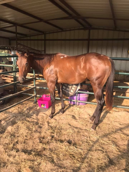 Dandy Lil Etrade, Appaloosa Filly for sale in Texas