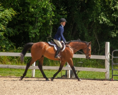 Just Tango, Thoroughbred Gelding for sale in North Carolina