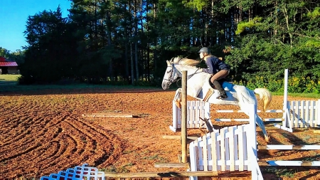 Epic Eventing Gelding!, Quarter Horse Cross Gelding for sale in North Carolina