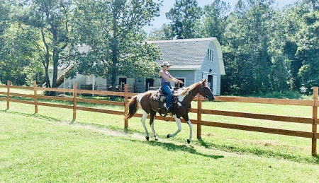 Dahlia, American Quarter Horse Mare for sale in North Carolina