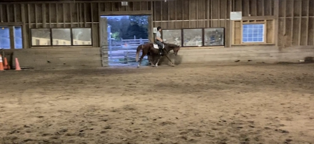Pebbles, Welsh Pony Mare for sale in Massachusetts