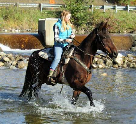 Cleveland, Missouri Fox Trotting Horse Gelding for sale in Michigan