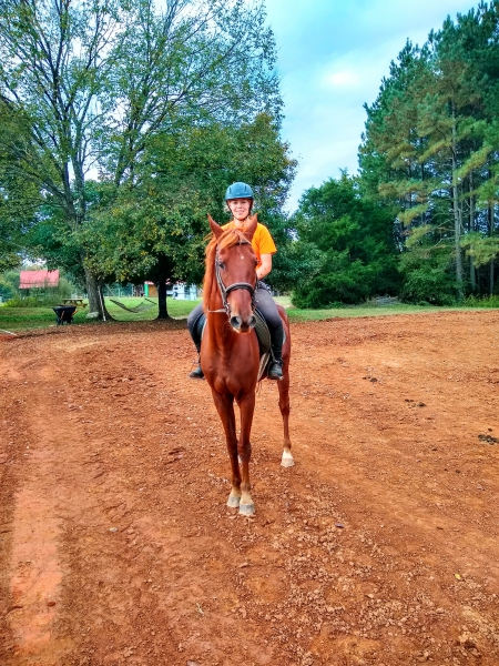 Churchill, American Saddlebred Gelding for sale in North Carolina