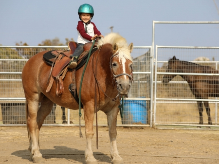 HoneyPie - Super Gentle Kids-safe Registered Halflinger for Sale!, Haflinger Mare for sale in California
